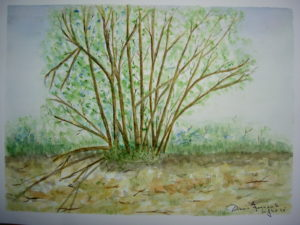 """Sant'Eufemia"" acquerello 30 x 23,5 cm 2010"