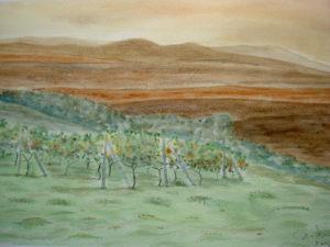 """""""Il vigneto"""" acquerello 30,5x45,5cm 2010"""